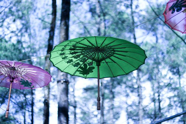 Tree Shelter Sky Close-up Umbrella Monsoon RainDrop Drop Torrential Rain Wet