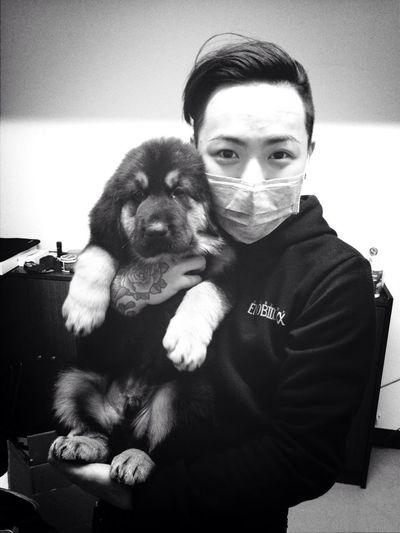 Caesar!!!! My borther's dog tibetan mastiff !!! Dog Pet Tibetan Mastiff Cute
