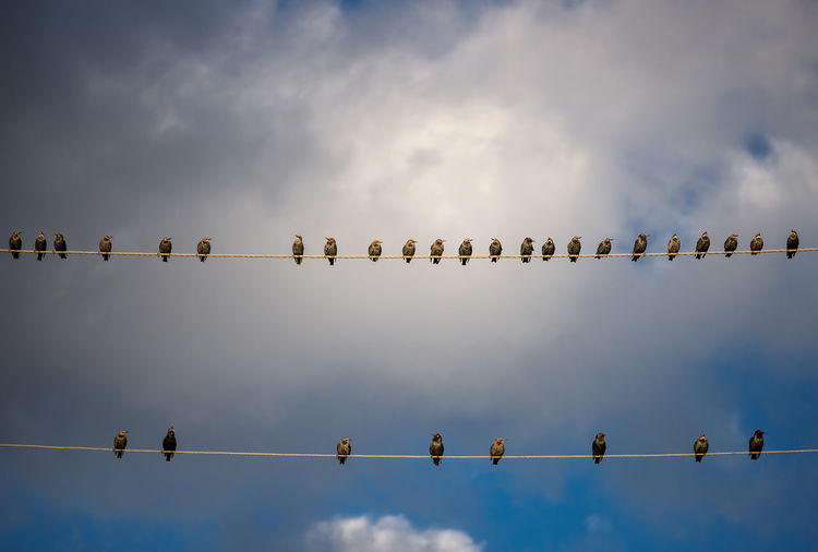 Group Of Birds Animal Animal Themes Animal Wildlife Animals In The Wild Beauty In Nature Bird Birds Birds Row Cable Cloud - Sky Day Electricity Pylon Flock Of Birds Group Of Animals In A Row Low Angle View Nature No People Outdoors Perching Power Cord Row Side By Side Silhouette Sky Vertebrate A New Beginning