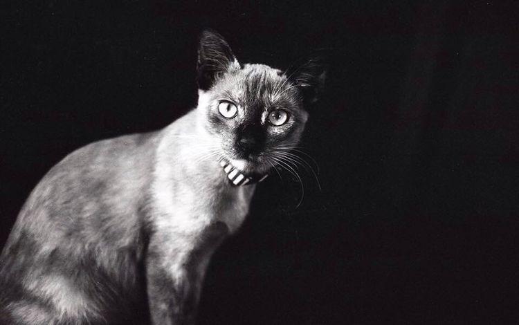 Meow Cat Analogue Photography Analog Analogue Kuala Lumpur Malaysia Black And White Monochrome Film Photography Stare Quiet Moments Pet Photography  Love EyeEmNewHere