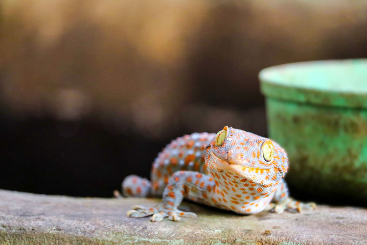 Close-up of lizard on retaining wall