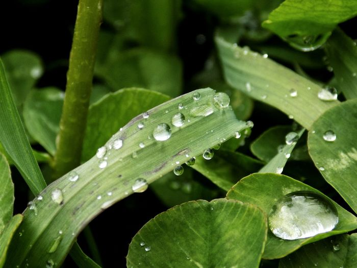 EyeEm Best Shots Taking Photos Taking Pictures Water Leaf Close-up Animal Themes Plant Green Color RainDrop Drop Leaf Vein Water Plant Wet Dripping Leaves Droplet Rain Blade Of Grass Water Drop Blooming