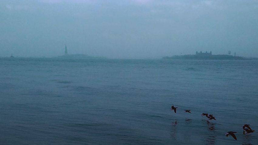 Bird Animal Wildlife Water Animals In The Wild Fog Outdoors Nature Tranquility Travel Destinations Beauty In Nature Animal Themes Nautical Vessel Sky Sea New York City Flying Birds Hovering Birds Blue Statue Of Liberty Elis Island Battery Park