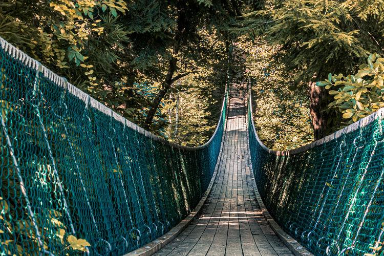 View of footbridge along trees