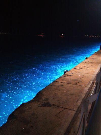 Sea Bay Area Harbour Night Lights Blue Sea Blue Blue Water Recife, BRASIL