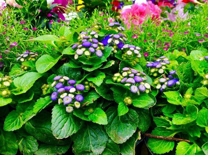 Taking Photos Hello World Flowers Fest Purple Sunday