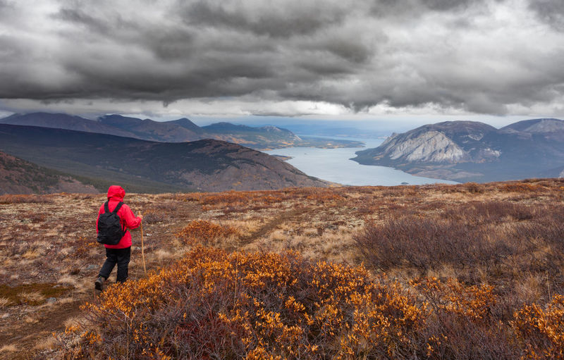 Hiker with backpack hiking Montana Mountain overlooking Tagish Lake, Yukon Territory, Canada, in autumn fall boreal alpine tundra on a rainy day Yukon Yukon Territory Canada Tagish Lake Autumn Fall Colors Hiker Hiking Hiking Adventure Alpine Landscape Alpine Hiking Alpine Tundra Mountain One Person Mountain Range Nature Adult Leisure Activity Landscape Outdoors Looking At View Alpine Travel Adventure Destination The Great Outdoors - 2019 EyeEm Awards