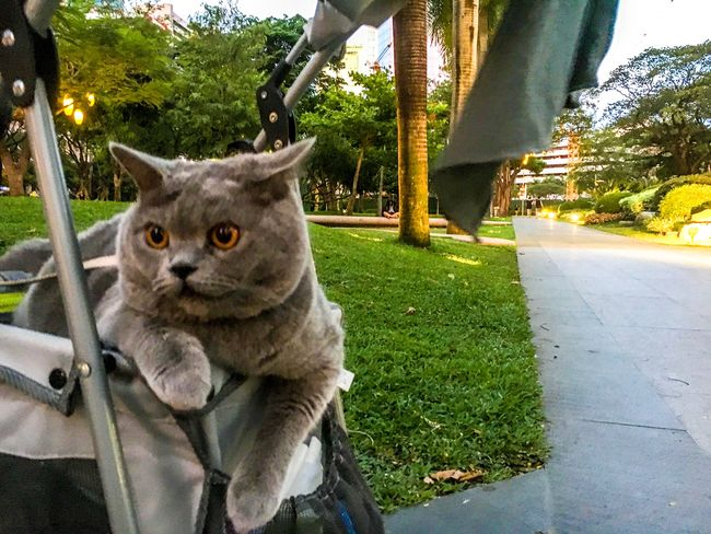 When You See Your Friend Dating Your Ex. Domestic Animals Pets Mammal Animal Themes Domestic Cat Outdoors One Animal Eyeem Philippines
