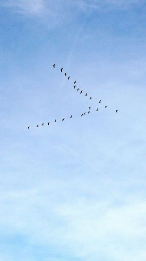 Goose Flying Bird Photography Hello World Taking Photos On The Road Enjoying Life View Clouds And Sky France