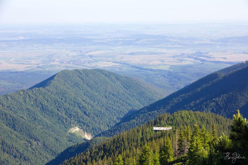 Peak Negoiu, Transylvania Beauty In Nature Day Forest Landscape Mountain Mountain Range Nature No People Outdoors Scenics Sky Tree