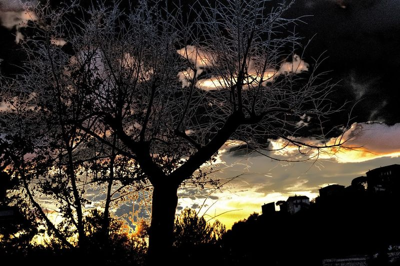 Tamron D3300 Fabioromani MonteAmiata Seggiano Italy Italia Nikon Toscana Tuscany Fabioromani Photooftheday Photography Photo Tree Nature Silhouette Sunset Tree Sky Nature Outdoors Scenics Beauty In Nature Tranquil Scene No People Tranquility Low Angle View Day