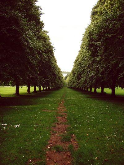 Stormont grounds in Northern Ireland . Nature EyeEm Nature Lover Eyeem Ireland Depth Of Field Depth Eyeem Northern Ireland Eyem Best Shots Travel Cgk Photography
