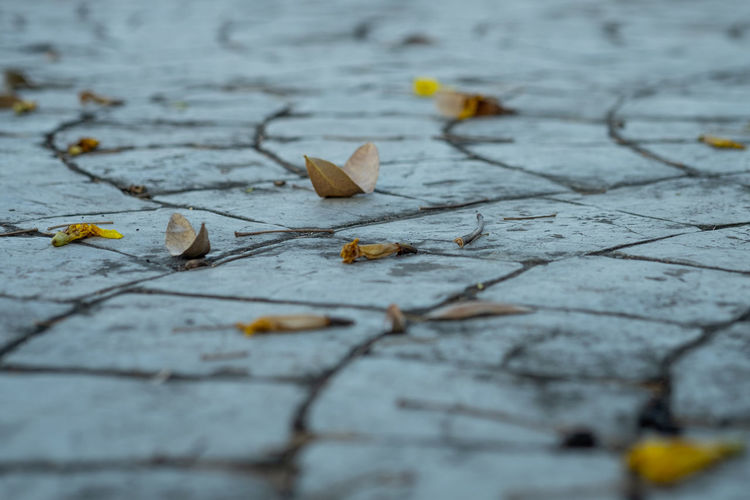 Close-up of leaves fallen on footpath