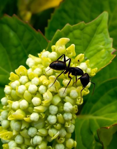 ant in action Flower Flower Photography Flowers, Nature And Beauty Ants Close Up Ants Nature Naturelovers Nature_perfection Nature Lover GREECE ♥♥ Full Length Flower Leaf Perching Insect Close-up Animal Themes Plant Green Color Ant