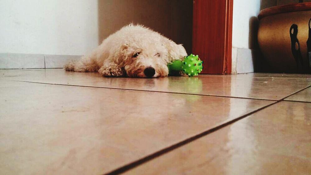 Dog Love Doglife Puppy❤ Puppy Love