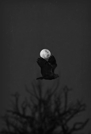 Owl flying at night Animals Moon Shots Moon Birds Bird Owl Nightphotography Night Night Blackandwhite Black Background Black & White Black And White Shadow Light EyeEm Vision EyeEm Still Life Fine Art Nature No People Winter Cold Temperature Night Beauty In Nature Outdoors Land Animals In The Wild Animal Wildlife Space And Astronomy Analogue Sound
