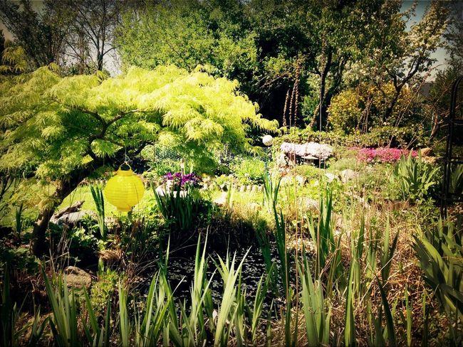 At my parents garden
