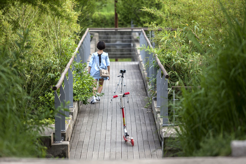Beauty In Nature Day Grass Green Color Group Of People Growth Leisure Activity Lifestyles Medium Group Of People Model Nature Outdoors Park Photography Plant Seonyudo Taking Photos The Way Forward Tourism Tranquility Travel Destinations Tree Walking