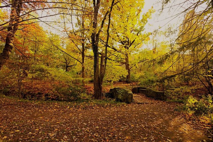 Tree Nature Beauty In Nature Scenics Autumn Forest Tranquility Growth Tranquil Scene Change No People Outdoors Sunlight Leaf Non-urban Scene Day Landscape Autunn Colours Autumn Colors Forrest Photography Forrest Nature Forrestwalk Naturelovers Naturephotography Fall Colors