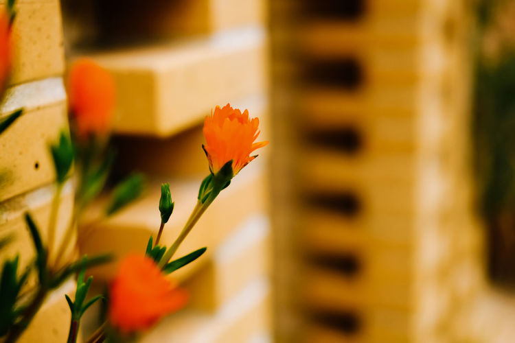 Flower Flowering Plant Beauty In Nature Freshness Plant Fragility Vulnerability  Petal Close-up Nature Selective Focus No People Flower Head Growth Inflorescence Outdoors Day Yellow Architecture Focus On Foreground Flower Arrangement