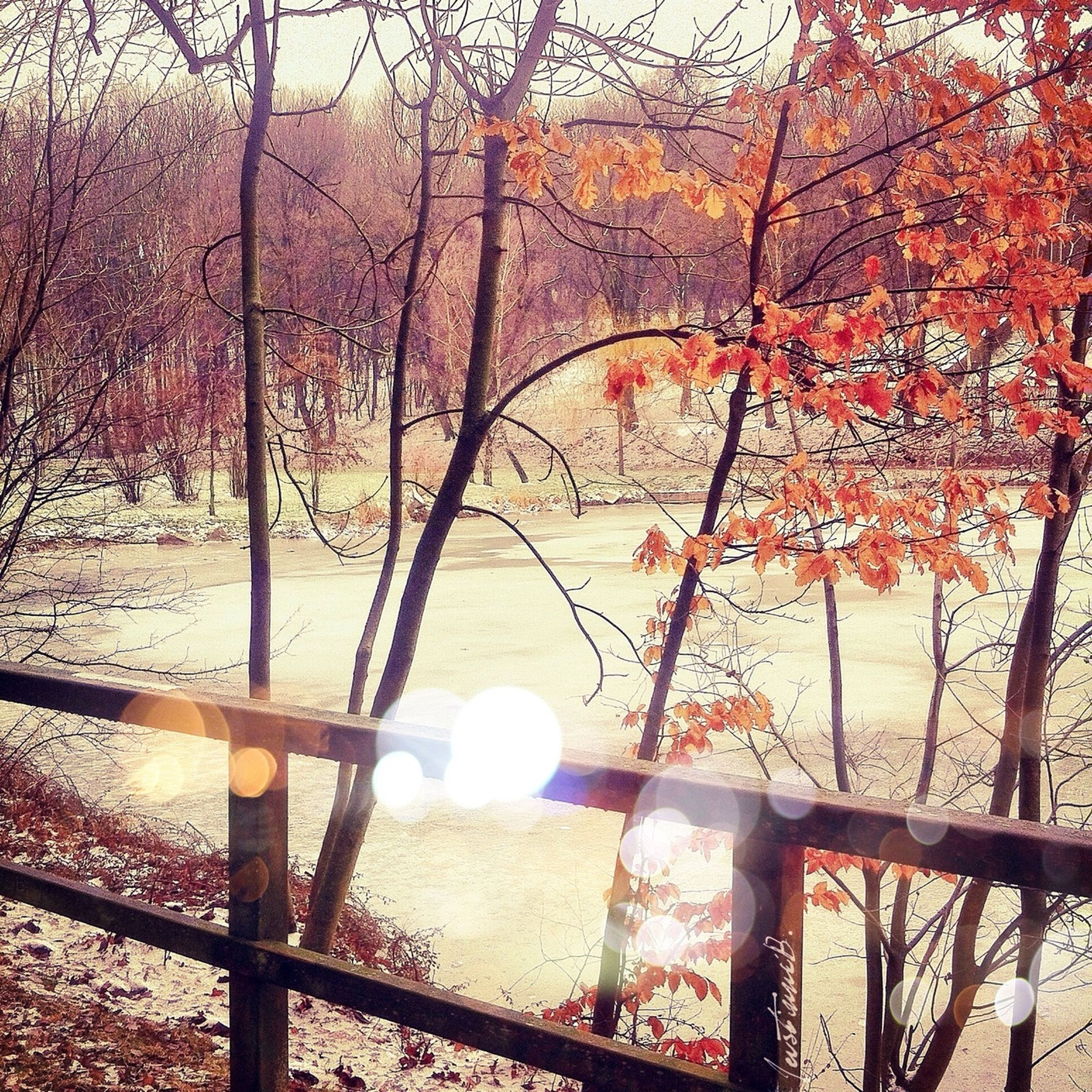 tree, railing, branch, season, tranquility, fence, nature, beauty in nature, tranquil scene, autumn, metal, water, scenics, growth, day, bare tree, no people, outdoors, park - man made space, orange color