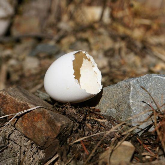 Foto: Val de Trail Bird Eggshell Egg Close-up Animal Egg