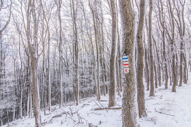 Winter Patriotism Flag Tree Bare Tree Snow Forest Cold Temperature Nature Tree Trunk Day Outdoors No People Tranquility Beauty In Nature Landscape Borzsony Kéktúra Hungary