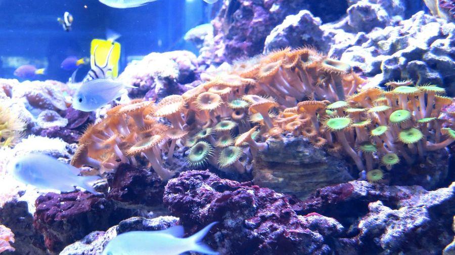 рыбы рыбки аквариум подводный мир Дикая природа жифотные фауна фото природы фото животных Fish Fishes Aquarium Aquarium Life Wild Life Underwater Underwater Photography Animals Animal Photography