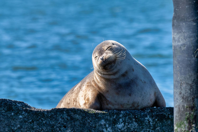 High angle view of seal
