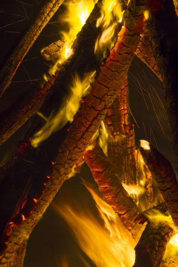 Close-up of lizard on tree trunk at night