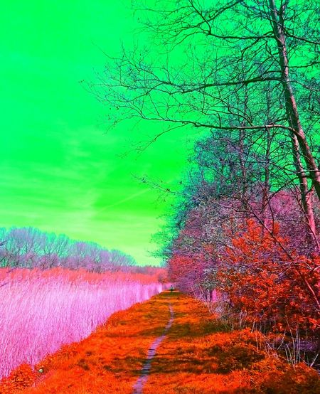 Stoned Or Dreaming What If The Sky Would Be Green... Changing The World Taking Steps