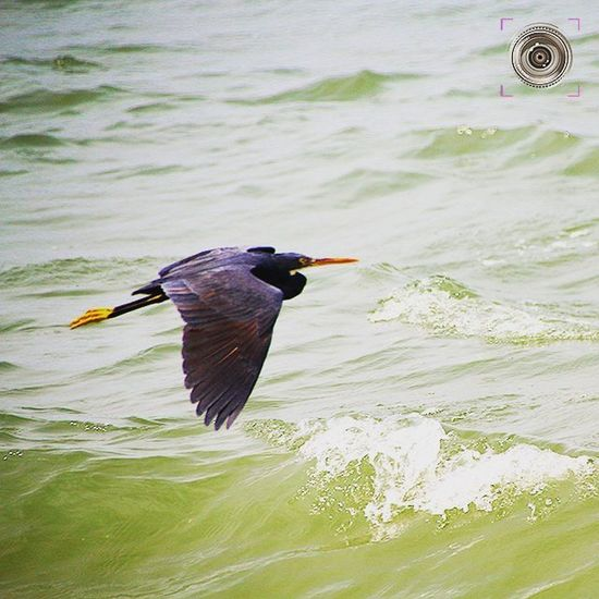 🐦 🐤 🇹 🇭 🇪 🔸 🇹 🇦 🇰 🇪 🔸 🇴 🇫 🇫 🐤 🐦 ALAPPUZHA BEACH , KERALA ~~ Crane Birds Nature Birdphotography Birdlover Kerala GodsOwnCountry Alappuzha Alleppey Convexrevolution Indianphotographer Birdsofeyeem Beachlife Beachbody Photographers_of_india Backwaters Green Greenery Birdsofinstagram Birdphotography Naturewatch Birdwatching