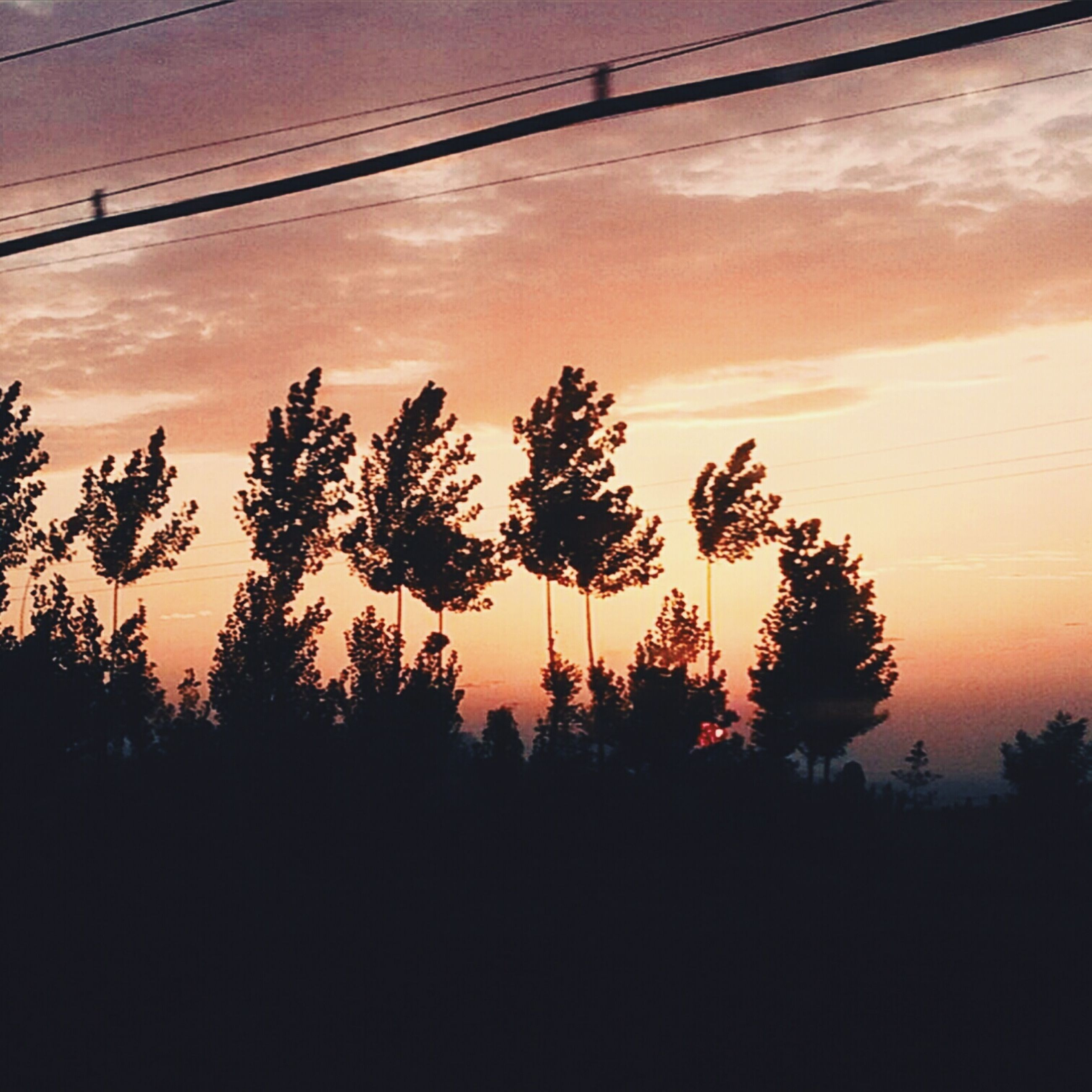 sunset, silhouette, tree, orange color, scenics, tranquility, beauty in nature, tranquil scene, sky, power line, nature, idyllic, electricity pylon, low angle view, growth, landscape, cable, connection, outdoors, electricity