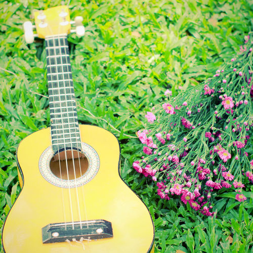 Guitar Musical Instrument Music String Instrument Musical Equipment Musical Instrument String Arts Culture And Entertainment Acoustic Guitar Plant String Flower Flowering Plant No People Green Color Day Close-up Nature Outdoors Growth Fretboard Ukulele Ukulele Learning