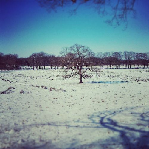 Worpswede Winter Lonesometree Landscapes