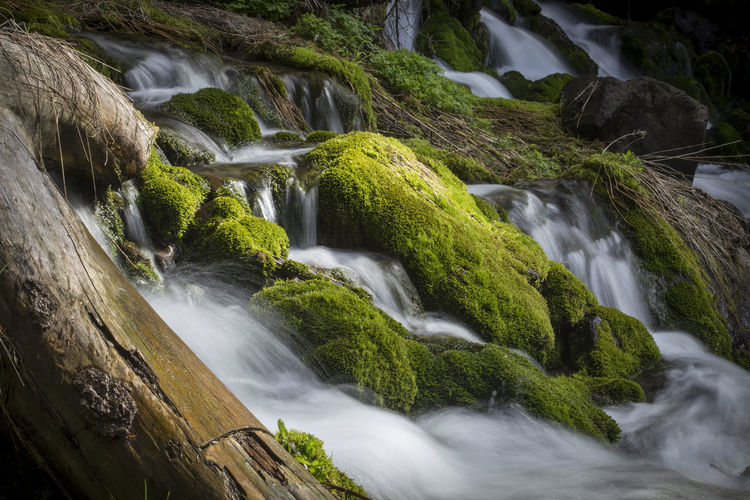 Water running down a river from the Heavenly lake in Tianshan Xinjiang China Beauty In Nature Blurred Motion Dappled Sunlight Day Flowing Water Forest Freshness Landscape_photography Long Exposure Moss Motion Nature No People Outdoors Rapid River Tranquil Scene Water Waterfall