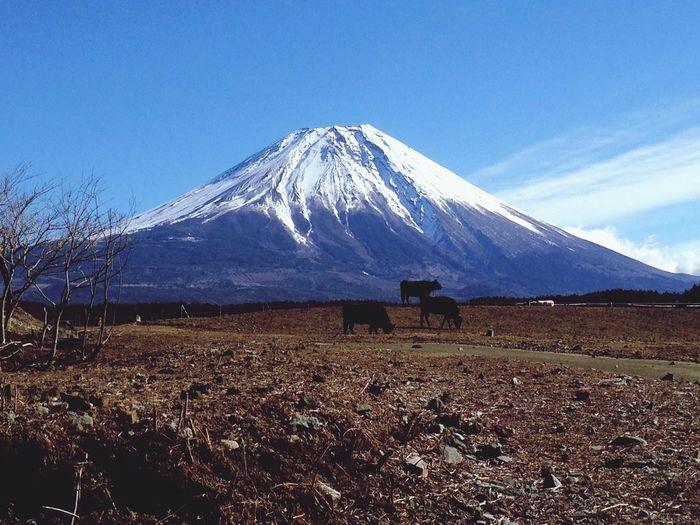 Nature Mtfuji Hello World Japan