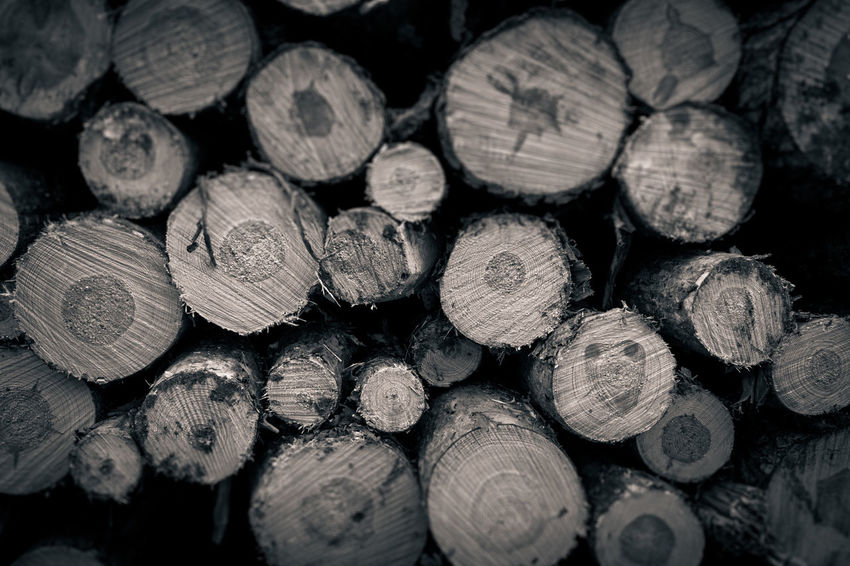 Abundance Backgrounds Close-up Day Firewood Forestry Industry Full Frame Heap Large Group Of Objects Log No People Pattern Stack Textured  Timber Woodpile