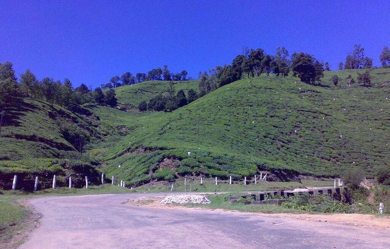 Tea corp, munnar Hanging Out Travel Destinations Travel Outdoors Landscape India Nature Munnar Kerala Tea