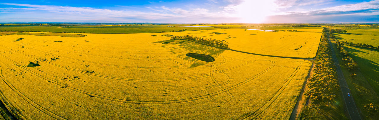 Aerial panorama of beautiful vivid yellow canola fields at sunset Australia Drone  Aerial Landscape Aerial View Agriculture Beauty In Nature Cloud - Sky Day Drone Photography Field Landscape Nature No People Outdoors Patchwork Landscape Rural Scene Scenics Sky Sun Sunlight Tranquil Scene Tranquility Tree Yellow