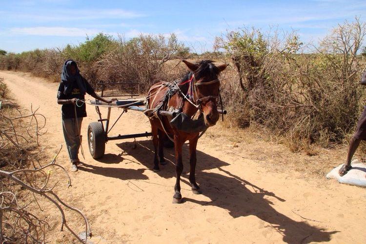 No Edit/no Filter Senegal Charette Horse Animal
