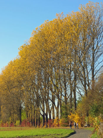 Autumn Autumn Colors Autumn Trees Bicycle Trip Bicycles Fall Fall Beauty Fall Colors Row Of Trees Trees Trees And Sky