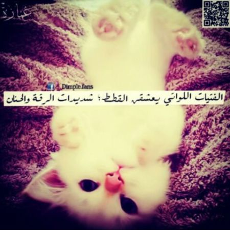 Check This Out Qoutes Lovely Cat's Lover أحلى دلووع يؤبشني قلبگ .. ♥