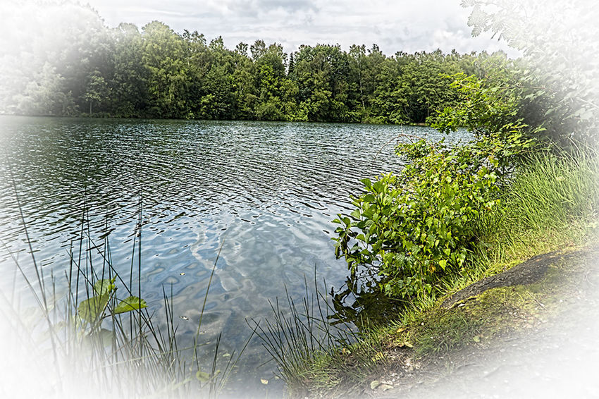 Beauty In Nature Day Focus On Foreground Green Color Landschaft Meer Nature Outdoors Plant Scenics Sea See Sky Tranquil Scene Tranquility Venekotensee Wald Water Weather Wouden