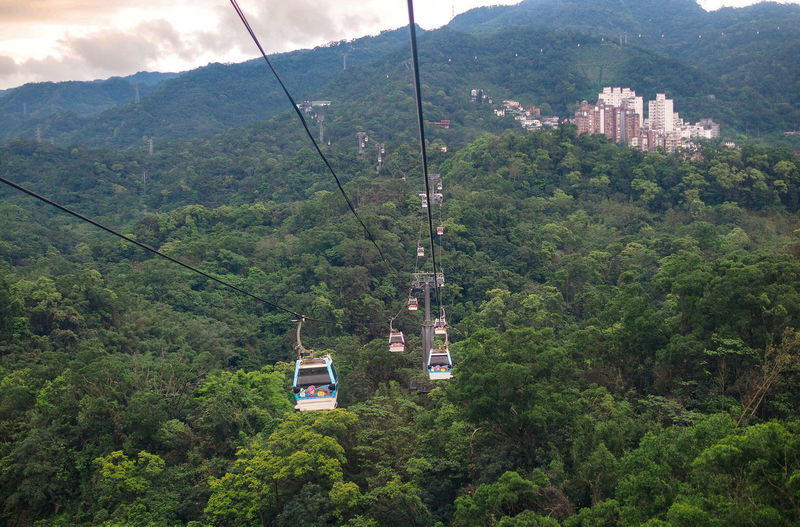 Overhead Cable Car Hanging Over Trees