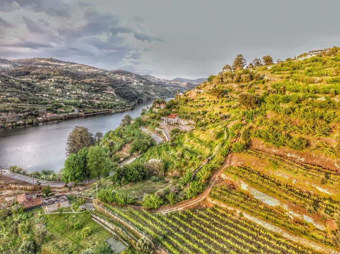 Douro valley from above Douro Valley Douro  Portugal Aerial Drone Photograph DJI Mavic Air DJI X Eyeem Plant Tree Scenics - Nature Sky Landscape Beauty In Nature Growth Rural Scene Water Cloud - Sky Agriculture Green Color High Angle View Tranquil Scene Day Tranquility No People Environment Nature Land
