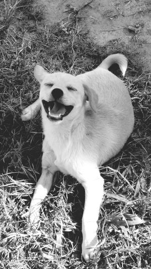 Dog❤ Love ♥ Laughing Out Loud Lol♥ Cute Animals So Cute ❤ Pet Love Simply Happy