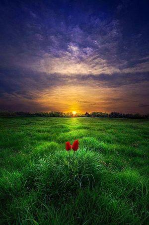 Un tramoto di fuoco su un prato verde come uno smeraldo