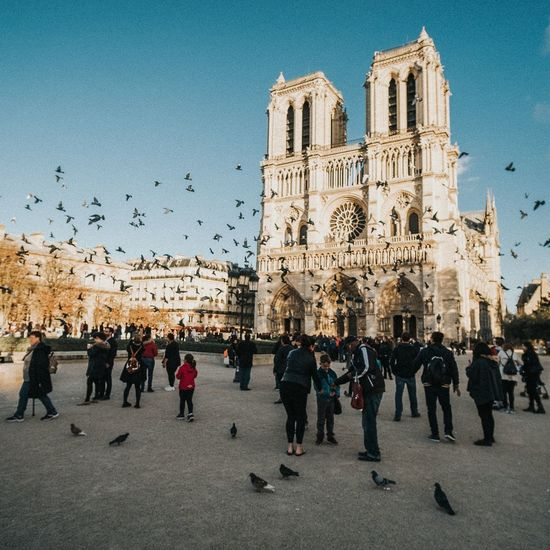 Paris 2017, Notre Dame The Week On EyeEm Travel Destinations People Large Group Of People Day Sky Clear Sky Architecture Outdoors Bird Adult Notre Dame De Paris Notre-Dame Notredame Paris Paris, France  Church Cathedral Sun Wanderlust Travel Traveling Travel Photography Travelphotography Architecture