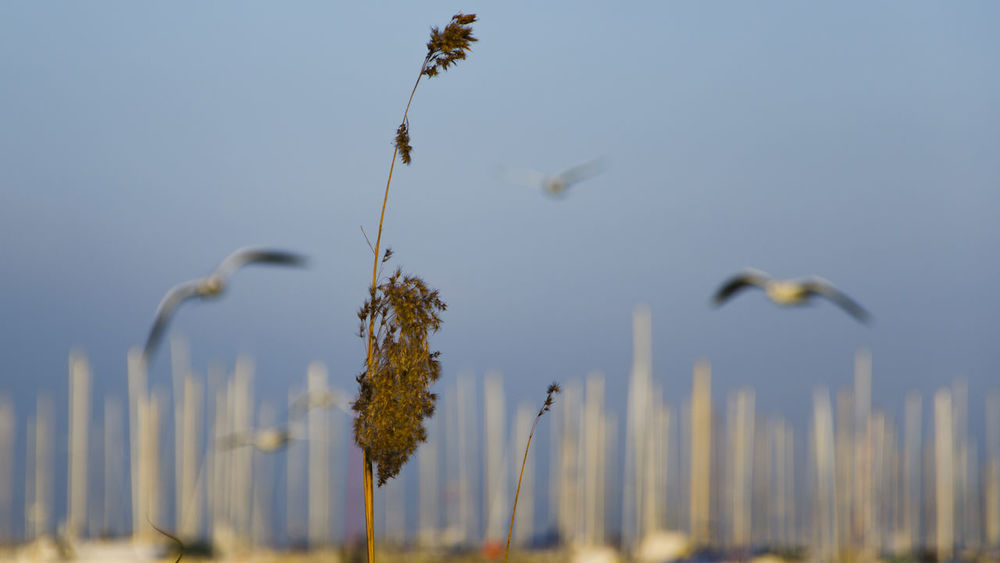 Barche Beauty In Nature Bird Boats Cabbiano Cielo Gabbiani Growth Nature Porto Portrait Seagull Seagulls Sky Spiga